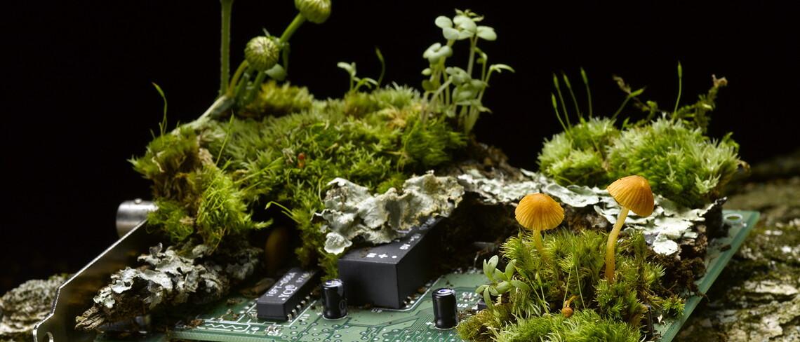 Verantwortungsvolles Design verbindet Technologie und Natur