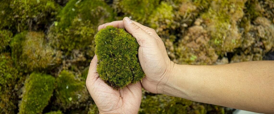 Das Moos wird von Green City Solutions selbst herangezogen. ©Green City Solutions