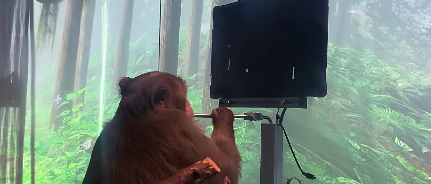 Ein Affe, der ein Pong-Spiel mit Gedankenkraft kontrolliert.